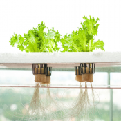 Hydroponic and Aquaponic System